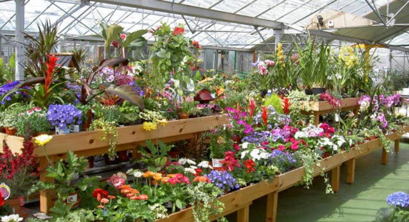 Increased Plant Imports: Need to Support UK Horticulture